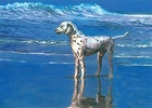 Dalmation On Beach Magnet
