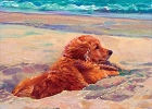 Golden Retriever Beach Magnet