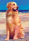 Golden Retriever Boardwalk Magnet