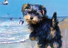 Yorkshire Terrier On Beach Magnet