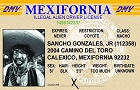 Illegal Alien  ID