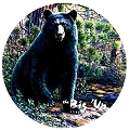 Bear-The Big Un Round Sign