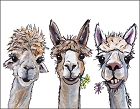 Alpaca Trio Metal Sign